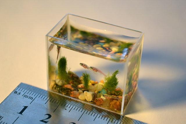 Le plus petit aquarium du monde le site du japon for Petit aquarium
