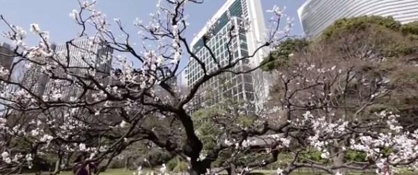 Japon, un voyage entre tradition et modernité, par AmnesiArt.