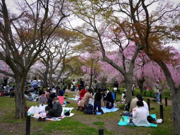 Hanami cerisier le printemps au japon le site du japon for Jardin kyoto