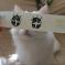 Les «chats mangas».