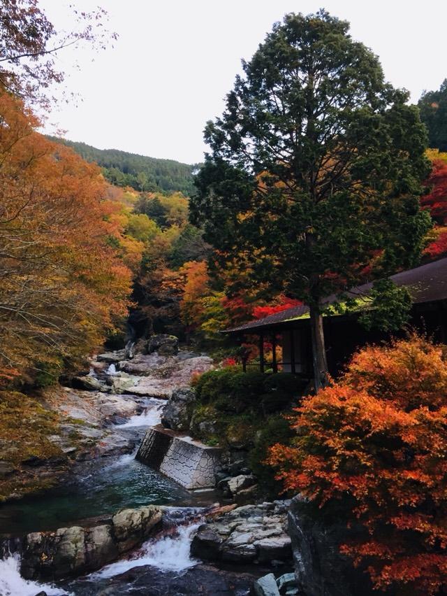 Le koyo la fin des momiji n en reste pas moins un moment magique - L automne et ses couleurs ...