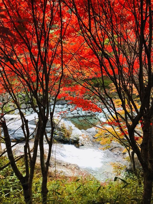 Koyo quand vient la fin de l 39 automne au japon le site du japon - L automne et ses couleurs ...